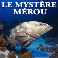 Télécharger Le mystère mérou Episode 1