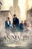 Animales fantásticos y dónde encontrarlos (Fantastic Beasts and Where to Find Them) - David Yates